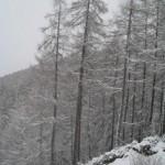 Aprica Magnolta- Pistone Magnolta